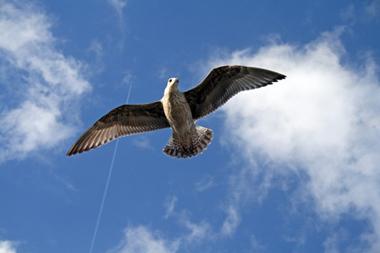 تحدث و حلِّق - speak and fly