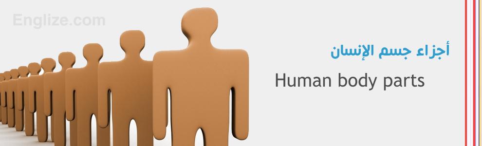 Photo of مصطلحات أجزاء جسم الإنسان في اللغة الإنجليزية